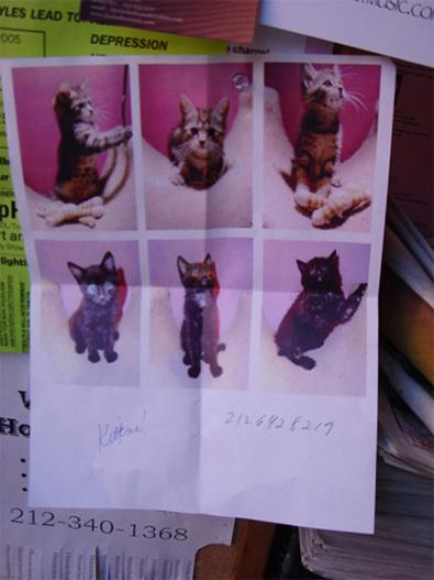Kittens_3